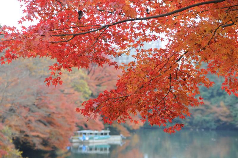 古城公園紅葉1.jpg